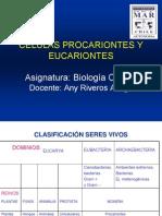 Celulas Procariontes y Eucariontes