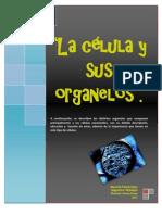 Células  y orgánulos
