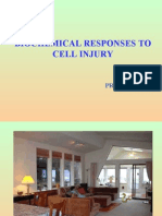 Lecture 9 - Biocemical Response to Cell Injury and Inflammation - 17 Sep 2006