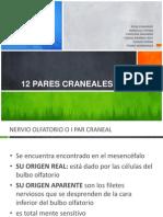 12 Pares Craneales