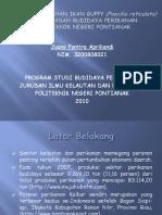 Power Point PKL 2