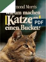 3453052137 Katzen b