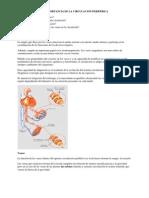 La importancia de la circulación periferica2.0