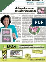 Trovata mela dalla polpa rossa, subito brevettata dall'Università - Il Carlino del 7 ottobre 2011