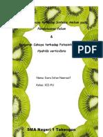 laporan fotosintesis