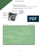 Carotid-Cavernous Fistula Mechanism and Symptomatology