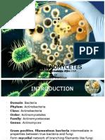 Actinomycetes Final