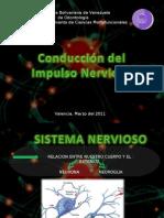 Conduccion Del Impulso Nervioso[1] Listas