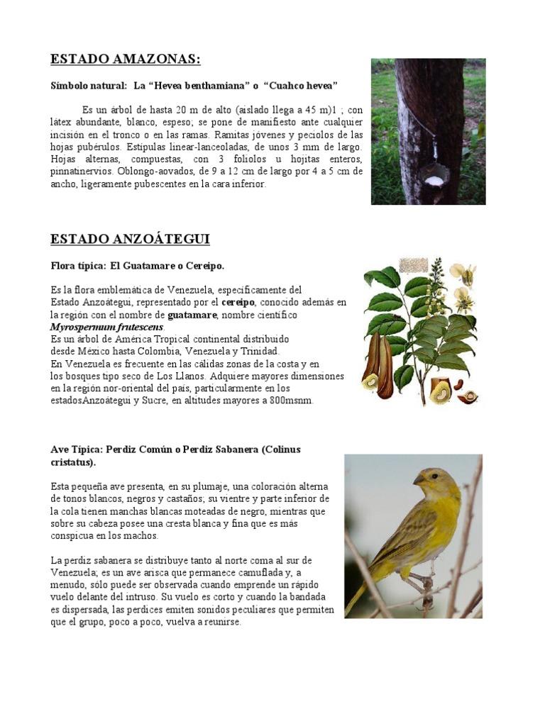 Símbolos Naturales de Venezuela - IVON