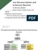 Autonomic Nervius System