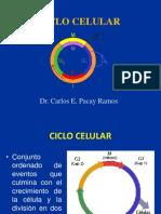 CICLO CELULAR Mitosis Meiosis 2011