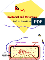 Cell Structure[1]
