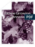 - Grape Growing in Tennessee