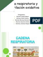 Fosforilacion Oxidativa Teoria Quimiosmotica
