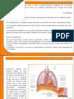 07 Sistema Cardiovascular