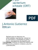 ORNITOBACTERIUM RINOTRACHEALE
