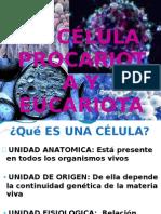 Celula Euca y Proca