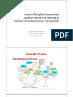 Biosintesis Del Etileno en Kiwi