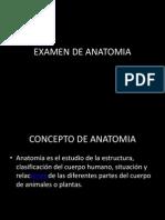 EXAMEN DE ANATOMIA