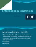 Enfermedades intestinales 1