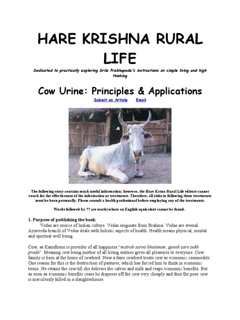Cow Urine Advantages Black | Ayurveda | Urine