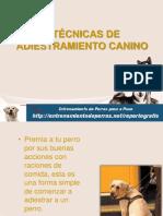 7 TÉCNICAS DE ADIESTRAMIENTO CANINO