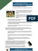 8. Guía de Entrenamiento para Perros