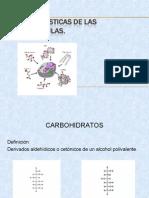 biomoleculas-carbohidratos-090916204245-phpapp01