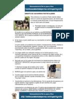 Entreanmiento de  Perros Cachorros Pastor Alemán