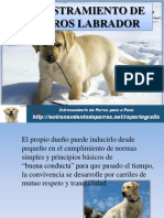 Adiestramiento de Perros Labrador