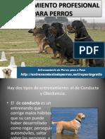 Entrenamiento Profesional Para Perros