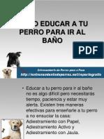 COMO EDUCAR A TU PERRO PARA IR AL BAÑO
