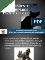 ENTRENAMIENTO DE CACHORROS PASTOR ALEMÁN