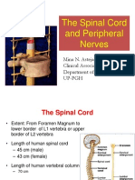 Spinal Cord and Peripheral Nerves 2011