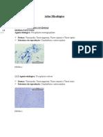 Atlas Micológico