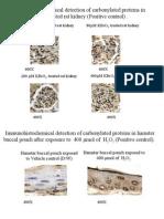 Hamster protein carbonylation