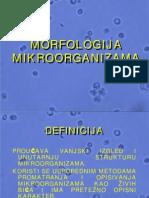 Morfologija_uvod