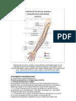 Anatomía de los nervios