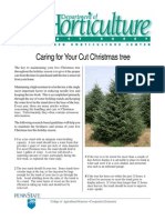 Caring for Your Cut Christmas Trees