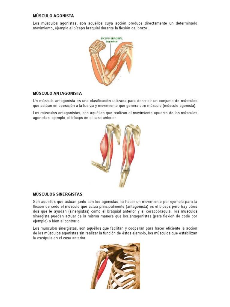 original músculo