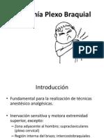 Anatomía Plexo Braquial