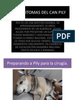 MASTOCITOMAS EN EL CAN PILY