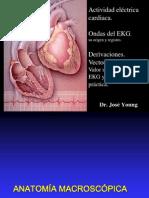 2 Vectocardiografia