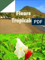 Fleurs tropicales