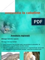 Anestezia La Cabaline