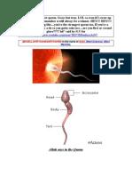 U R the Strongest Sperm. AiNv