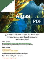 Clasificacion de Las Algas