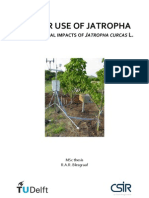 Water Use of Jatropha