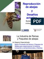 Susan Cobey Desafíos para la crianza de abejas reinas