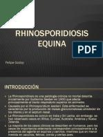 Rhinosporidiosis